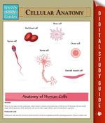 Cellular Anatomy : Speedy Study Guides - Speedy Publishing