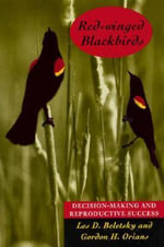 Red-winged Blackbirds : Decision-making and Reproductive Success - Les Beletsky