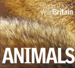 Animals : Wild Britain