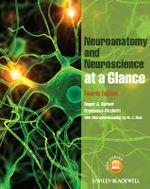 Neuroanatomy and Neuroscience at a Glance : At a Glance Medical Reference - Roger A. Barker