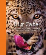 Big Cats : In Search of Lions, Leopards, Cheetahs, and Tigers - Steve Bloom