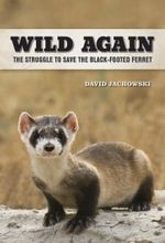Wild Again : The Struggle to Save the Black-Footed Ferret - David S. Jachowski