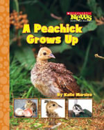 A Peachick Grows Up : Scholastic News Nonfiction Readers: Life Cycles (Paperback) - Katie Marsico