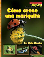 Como Crece una Mariquita = A Ladybug Larva Grows Up : Scholastic News Nonfiction Readers en Espanol - Katie Marsico