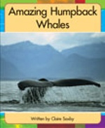 Lvl 19h : Amazing Humpback Whales - Claire Saxby