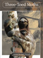 Lvl 29F : Three-toed Sloth - Edel Wignell