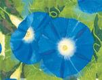 Painted Garden Keepsake Box - Robert Zakanitch