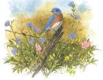 Four Seasons of Birds - Julie Zickefoose