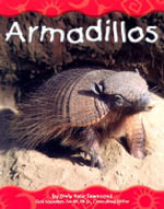 Armadillos : Desert Animals - Emily Rose Townsend
