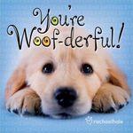 You're Woof-derful! - Rachael Hale