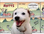 Everyday Mutts : A Comic Strip Treasury - Patrick McDonnell