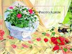 Wedding Photo Album - Sue Pontefract