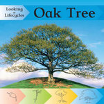 Oak Tree : Looking at Life Cycles - Victoria Huseby