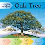 Oak Tree : Looking at Life Cycles - Victoria Huseby