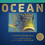 Ocean : A Photicular Book - Carol Kaufmann