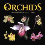 Orchids - Bruce Curtis