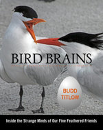Bird Brains : Inside the Strange Minds of Our Fine Feathered Friends - Budd Titlow