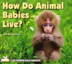 How Do Animal Babies Live? : I Like Reading About Animals Series - Faith Hickman Brynie