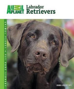 Labrador Retrievers - Nikki Moustaki