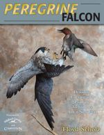 Peregrine Falcon : Dynamic Carving and Painting Techniques for a New Era - Floyd Scholz