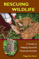 Rescuing Wildlife : A Guide to Helping Injured & Orphaned Animals - Peggy Hentz