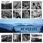 My Wild Life : A Memoir of Adventures Within America's National Parks - Roland H. Wauer