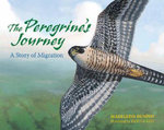 The Peregrine's Journey : A Story of Migration - Madeleine Dunphy