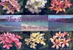 The Exotic Plumeria : A Pictorial: The Flower of Hawaii - Alan W Bunch