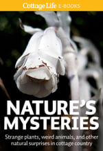 Nature's Mysteries : Strange plants, weird animals, and other natural surprises in cottage country - Cottage Life