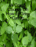 A Crash Course On How to Grow Catnip - Ernesto Waters