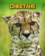 Cheetahs : Infosearch: Living in the Wild: Big Cats - Charlotte Guillain