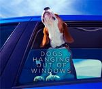 Dogs Hanging out of Windows - Various