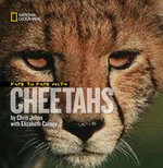 Face to Face with Cheetahs - Chris Johns