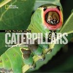 Face to Face with Caterpillars : Face to Face - Darlyne Murawski