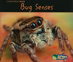 Bug Senses - Charlotte Guillain