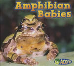 Amphibian Babies : A Pocket Guide in English and Spanish/Guya de Bols... - Catherine Veitch