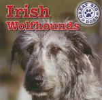 Irish Wolfhounds - Kristen Rajczak