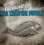 Sea Creature Fossils : Fossilized! (Gareth Stevens) - Kathleen Connors
