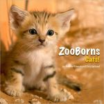 ZooBorns Cats! : The Newest, Cutest Kittens and Cubs from the World's Zoos - Andrew Bleiman