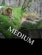 Medium - Jason Daniel Clark