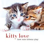 Kitty love : How cute kittens play - Sterling Publishing Company