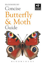 Concise Butterfly and Moth Guide - Bloomsbury Publishing