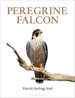 Peregrine Falcon - Patrick Stirling-Aird