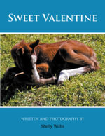 Sweet Valentine - Shelly Willis