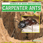 Carpenter Ants - Katherine Ponka