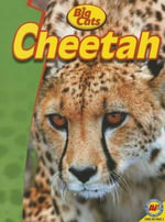 Cheetah - Steve Goldsworthy