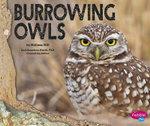 Burrowing Owls : Owls
