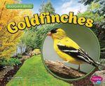 Goldfinches : Backyard Birds