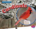Cardinals : Backyard Birds