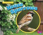 House Sparrows : Backyard Birds